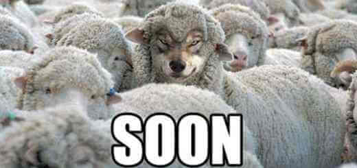 Hilarious and Comedic Pictures of sheep