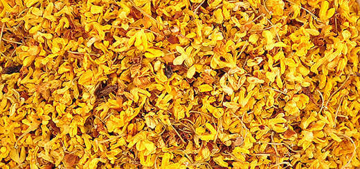 The Amazing Benefits of Osmanthus Flowers