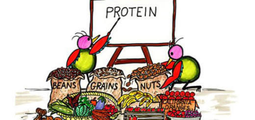 - 20 VeganPlant Sources for Protein